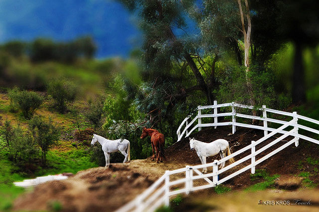 fake-tilt-shift-photo-14