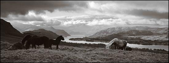 Wild Horses On Heughscar Hill - Ullswater, Lake District National Park by john lunt