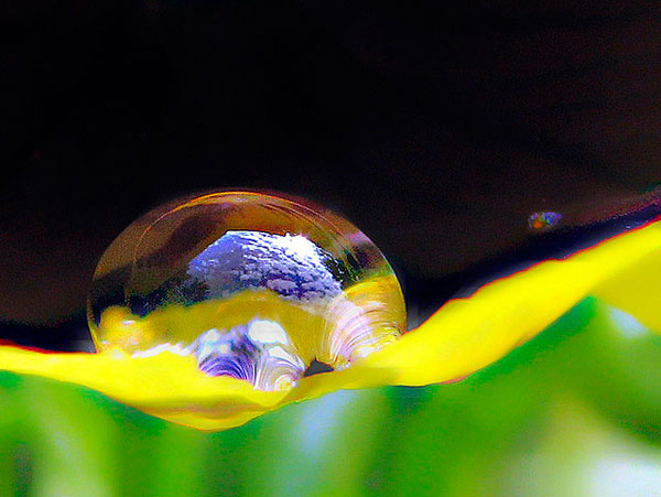 Waterdrop in the morning