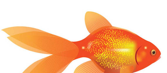 How to Create a Vector Goldfish in Six Steps Adobe Illustrator tutorial
