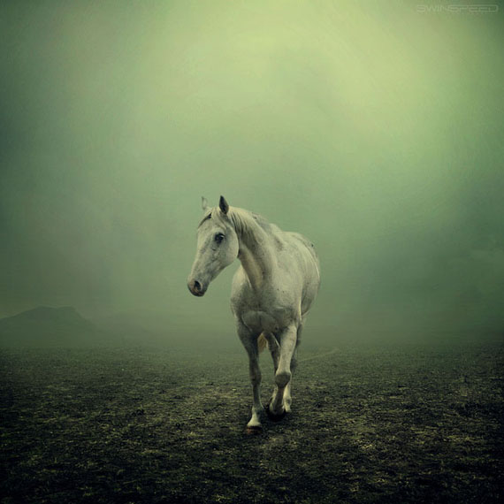 horse_photography_1