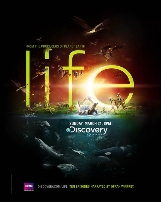 Discovery Channel - Life_14