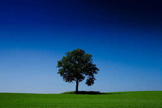 tree photography_5