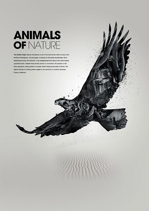 Animals of Nature - Eagle